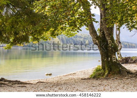 Old tree by the Bohinj lake, Slovenia