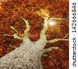 old tree in autumn - stock