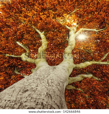 old tree in autumn - stock photo