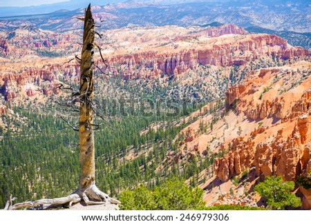 Old tree in Bryce Canyon national park, Utah, USA - stock photo