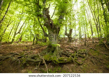 Old tree in forest - stock photo