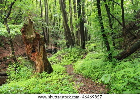 Old tree in the forest - stock photo