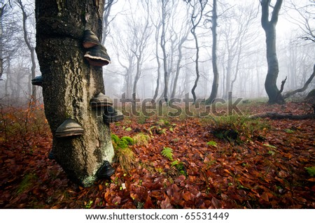 Old tree in the magical misty forest - stock photo