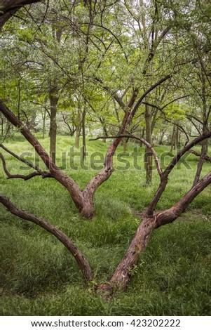 Old Oaks Garden Stock Photo 93293851 Shutterstock