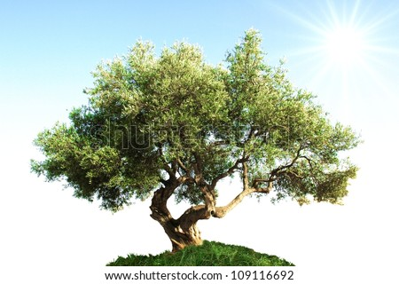 old tree in the sunshine - stock photo