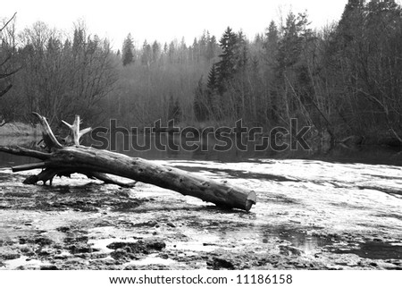 Old tree laying near to the bank of the river - stock photo