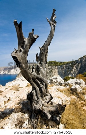 Old tree on a cliff in Greece - stock photo