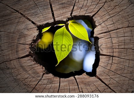 Old tree stump and isolated on middle part, green tree. - stock photo
