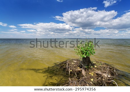 old tree stump in the water  / bright sunny summer day Ukraine Dnipro River