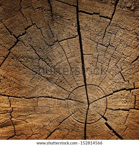 Old tree stump texture - stock photo