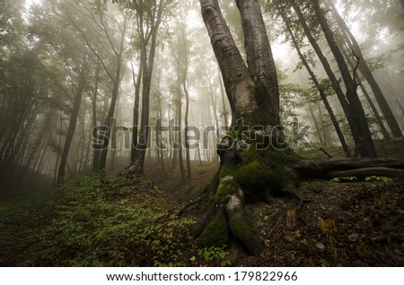 old tree with twisted roots in green misty forest