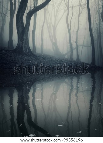 old trees reflecting in a forest lake - stock photo