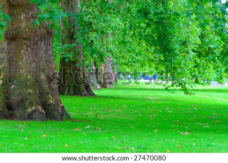 old trees with green leaves and green meadows