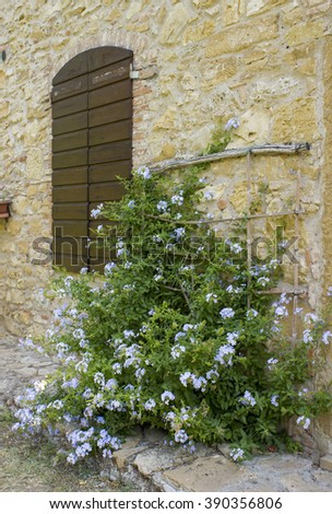 old tuscan wall with window and flowers - stock photo