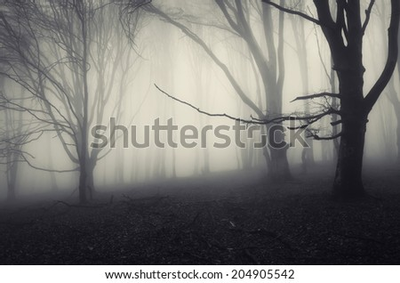 old twisted trees in a spooky forest