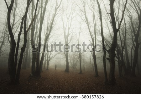 old twisted trees in forest - stock photo