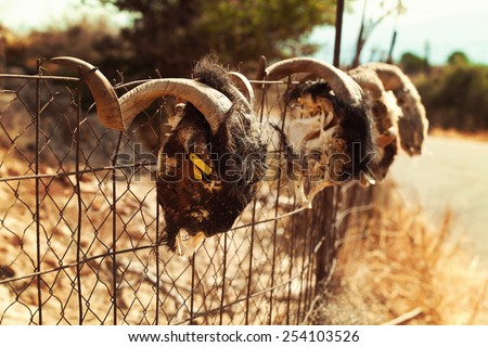 Old village background with goat skull - stock photo