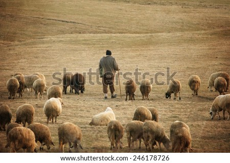 old vintage pastoral landscape with herd of sheep and his shepard near bulgarian small village - stock photo