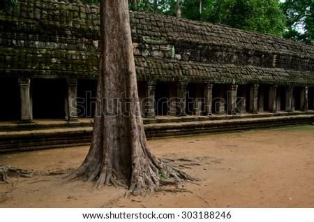 Old wall and tree of Ta Phrom, Angkor - stock photo