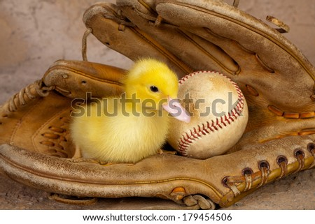 Old weathered baseball glove with a cute yellow easter duckling - stock photo