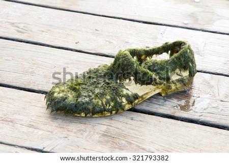 Old wet shoe full of algae - stock photo
