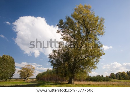 Old Willow tree against blue cloudy sky