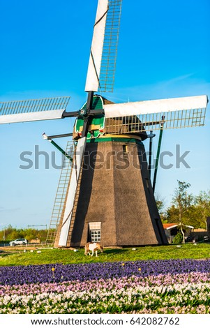 Old windmill in the flowers field