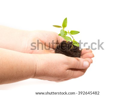 Old woman hands holding a green young plant. Symbol of spring and ecology concept
