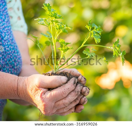 Old woman holding young green tree plant in hands against grunge background. Environmental protection concept