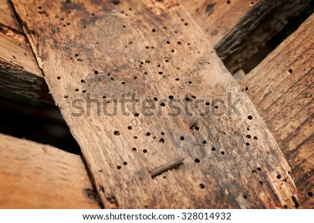 Old wood damaged by borers - stock photo