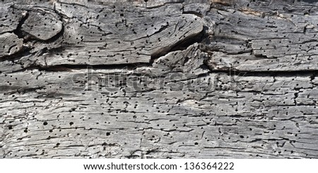 Old wood, nature texture