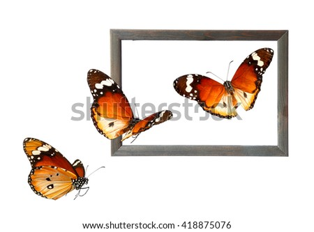 Old wood photo frame and butterflies isolated on white. ( Butterflies of Danaus chrysippus (Plain tiger or African monarch). Wildlife art composition  - stock photo
