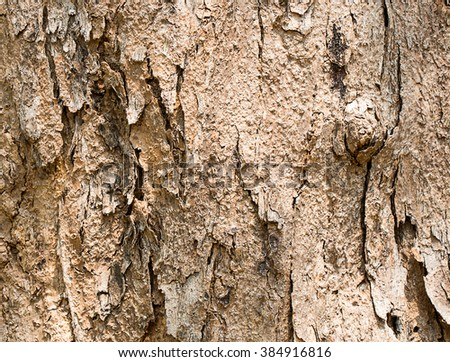 Old wood texture background / Bark of tree