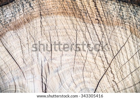 old wood texture for background, nature series - stock photo