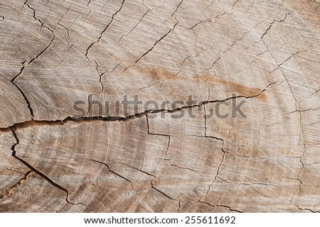 Old Wood Texture for text and Background - stock photo
