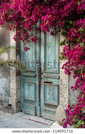 Old wooden door with bougainvillea in Cyprus - stock photo