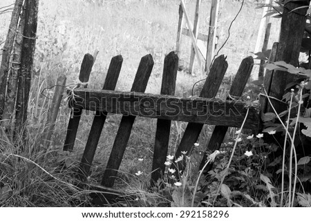 Old wooden fence, monochrome, broken and overgrown in a deserted garden. - stock photo