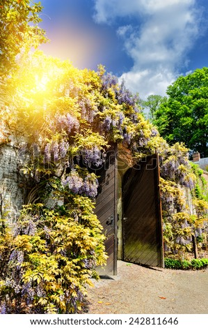 Old wooden gate in a city park with wisteria flowers  - stock photo
