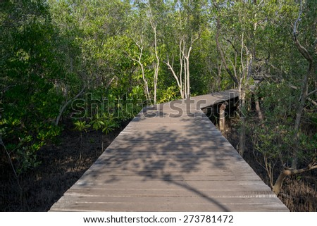 Old wooden path in the mangrove forest.