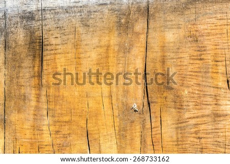 Old wooden plank worn out by weather - stock photo