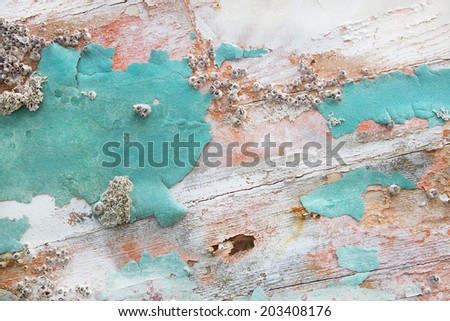 Old wooden shabby chic background with aged calcification of mussels and fossils in turquoise pastel colors. - stock photo