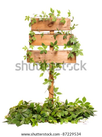 Old wooden signpost entwined vines. - stock photo