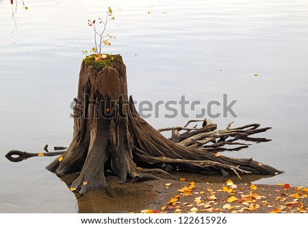 old wooden stump with the new germ in the water, Karelia, Russia - stock photo