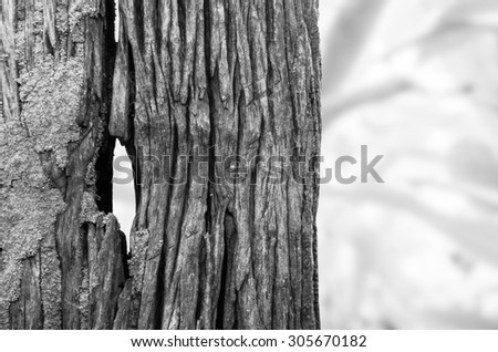Old wooden texture that it's natural pattern for design element, black and white photography.