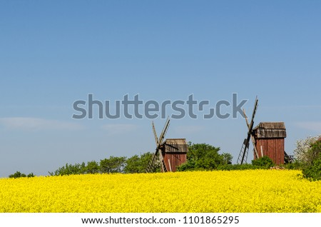 Old wooden windmills by a blossom rapeseed field at the swedish island Oland