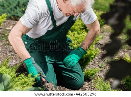 Older tired man kneeling on the ground in green overallals and gloves and preparing the place for planting the neww seeedling