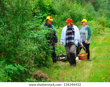 Older two women and men gather mushrooms in the forest - stock photo