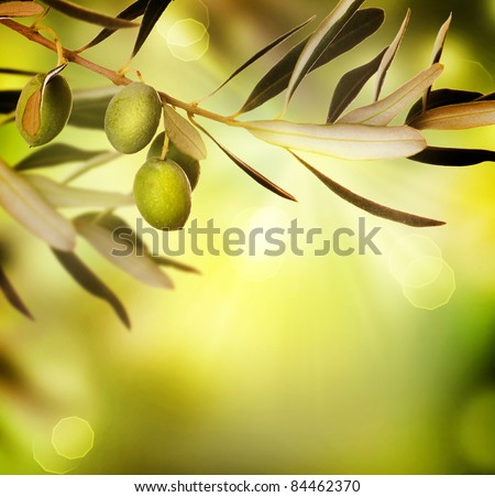 Olive border design.Food background - stock photo