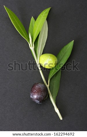 Olive branch and olives - stock photo