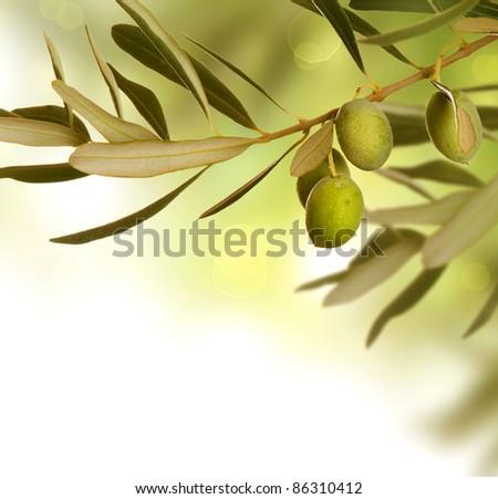 Olive Branch border design. Growing Olives - stock photo